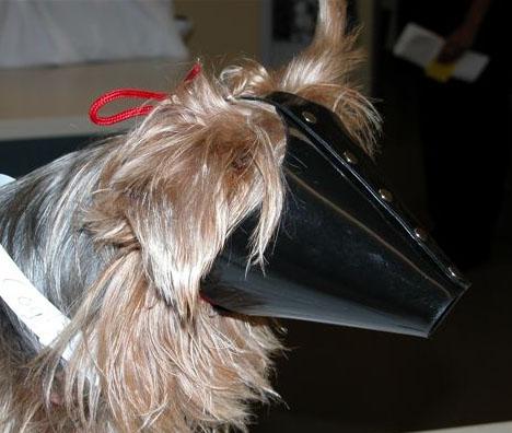 World S Best Cat Amp Dog Muzzle